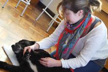 Dog physiotherapy