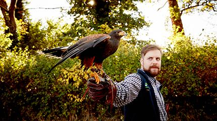 Hawk inspires countryside career of Harper Adams University student