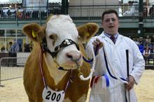 Alex at Stafford Show 2016 with his prize cow Popes Whispers Coco
