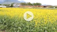 Biofumigation YouTube video
