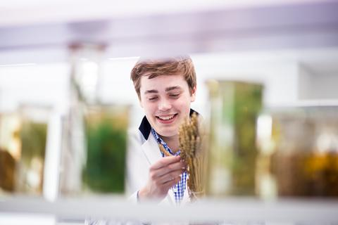 Rory in the crops laboratory at Harper Adams