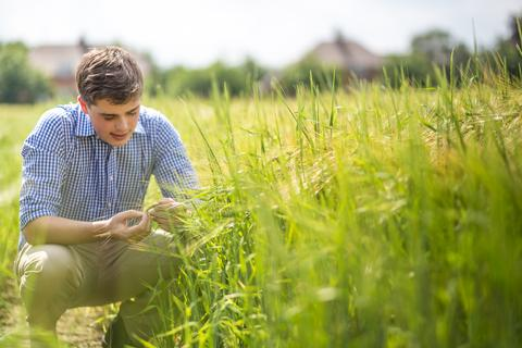 Rory inspecting crops