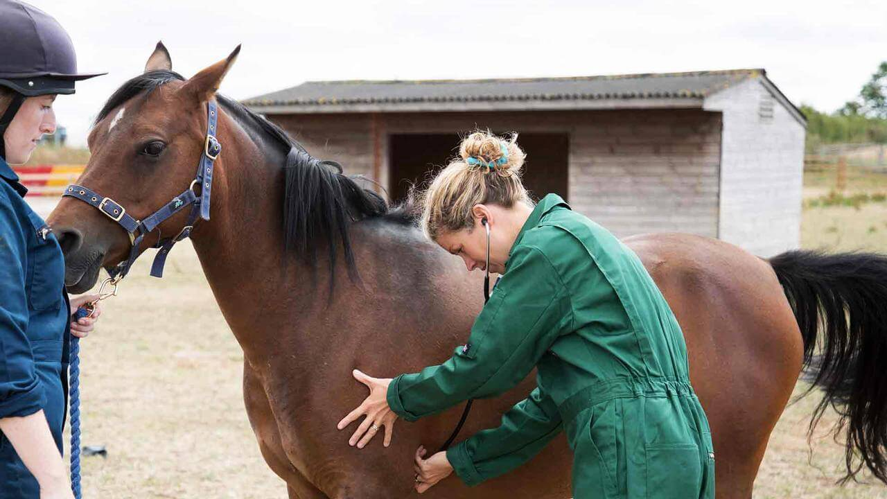 Animals and Veterinary Sciences Open Day - 23 March 2019