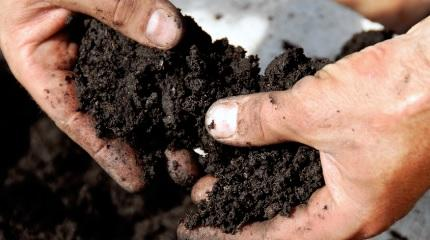World Soil Day Dec 5: The hidden creatures in our soils