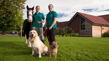 Centre opens up veterinary physiotherapy services to wider community