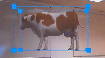 Holo-cow! Team develops mixed reality learning tool to bring cattle into classrooms