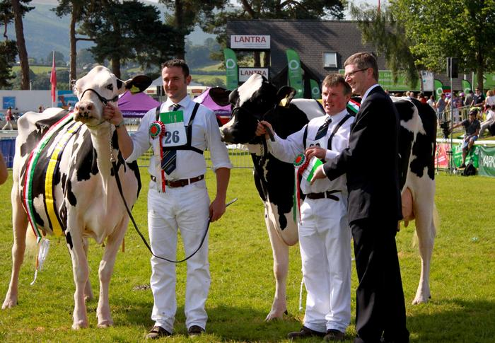 Dr Llewellyn in the ring with the Fitzhugh Dairy Champions