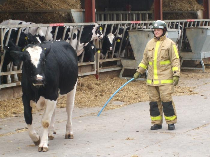 Learning how to handle livestock correctly could help prevent injuries to both people and the animals