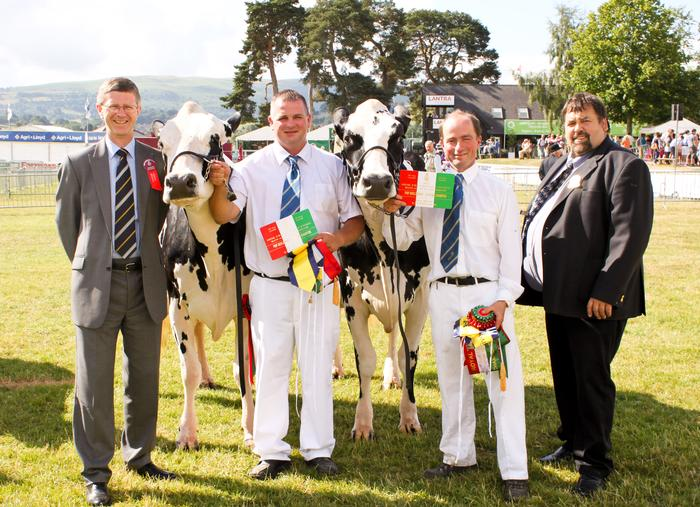 Dr David Llewellyn in the cattle ring with the Fitzhugh Dairy Champions at the 2013 show