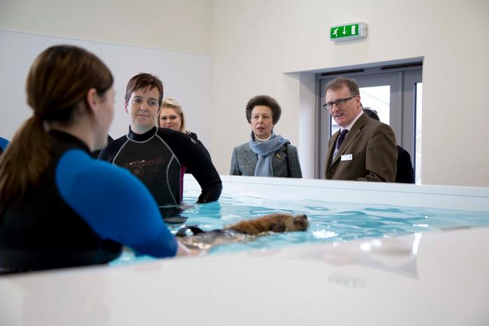 The Chancellor observes a tutorial at the canine hydrotherapy pool (click on image to enlarge).