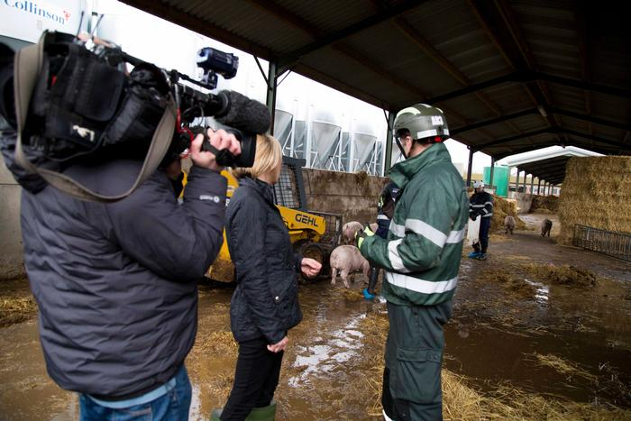 TV crews filming the pig handling session