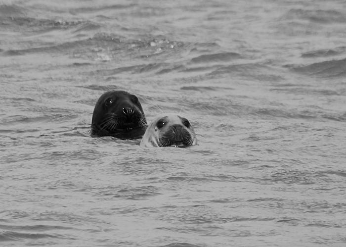 Seals by Thomas Leigh