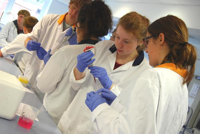 The students working in the laboratory