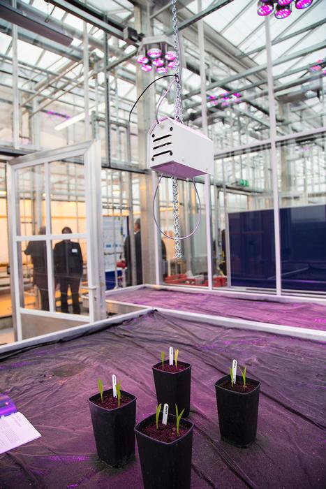 The glasshouse has an LED lighting system