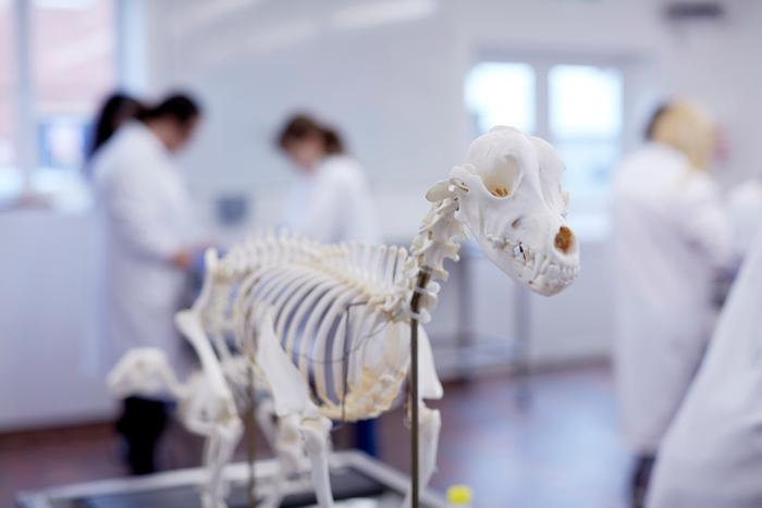 Harper Adams University's veterinary studies experience and large and small animal facilities will complement Keele's strengths in life sciences