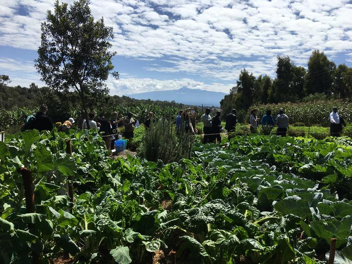 Vegetables in the field with Mt Kenya in the background