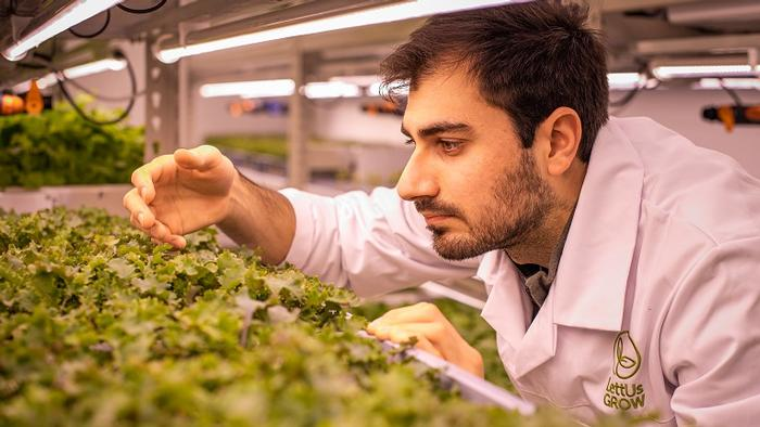 A man in a lab coat examines salad crops being grown in an indoor farming environment.