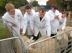 Young farmers judging sheep