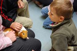 Meeting a guinea pig