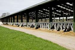 The dairy unit at Harper Adams