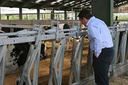 A member of the 300 Cow Club views the Harper dairy unit