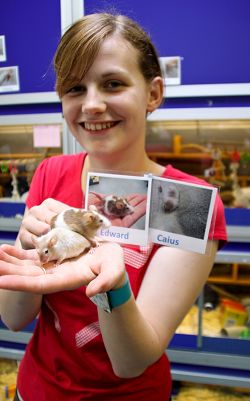 Louise Campbell Kelly, 21, who is working at the Companion Animal House at Harper Adams University College, is pictured with mice Edward and Caius named after characters from the Twilight saga.