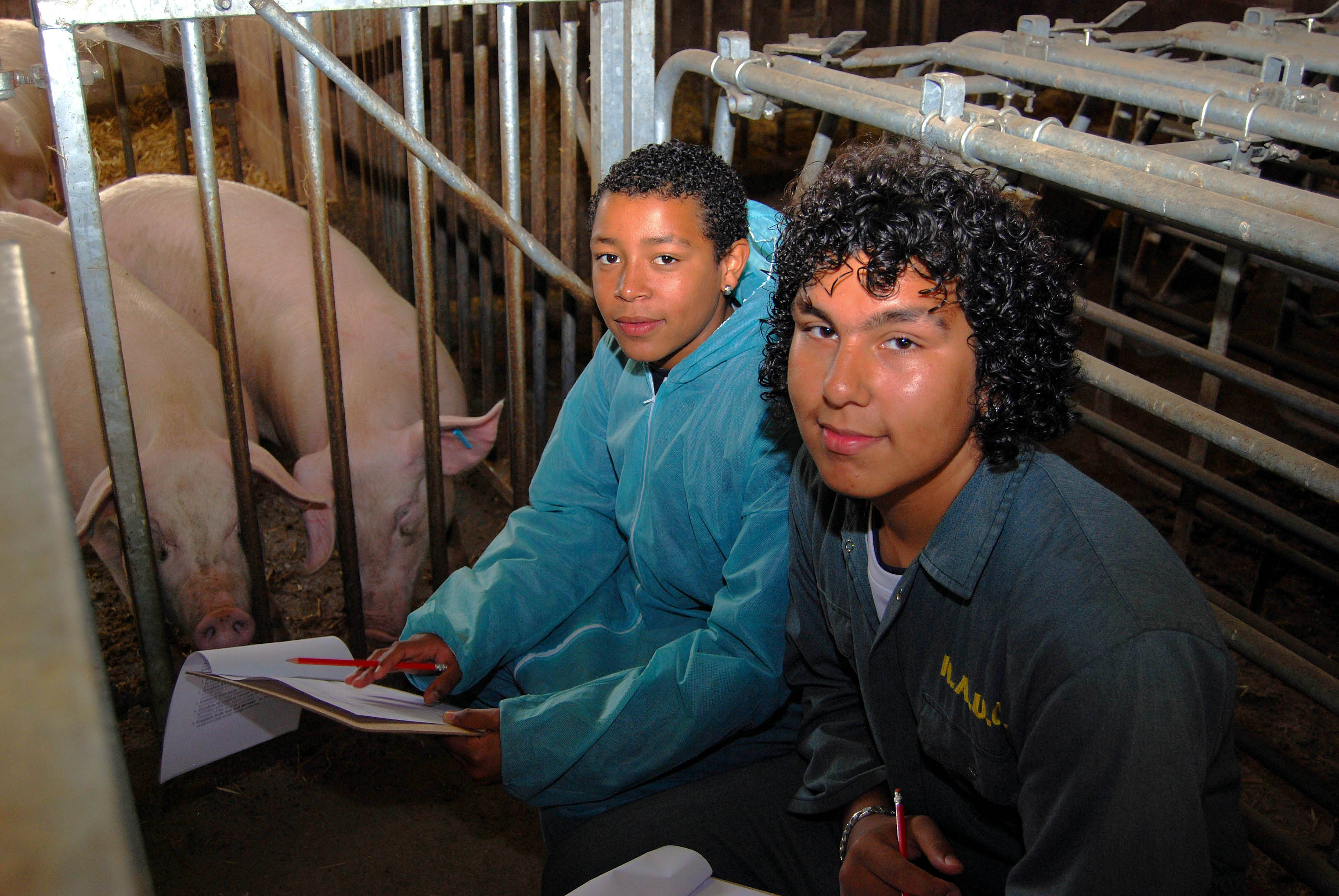 Pupils in the pig unit