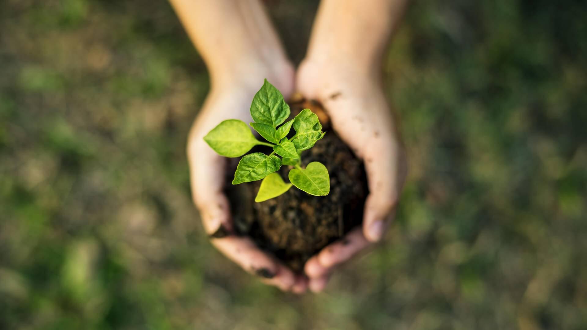 在手上的土壤中种植