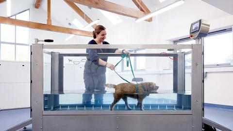 Hydrotherapy treadmill